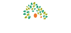 The Soul Searching Company